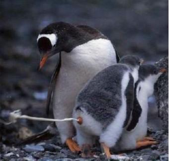 Pingpoepin